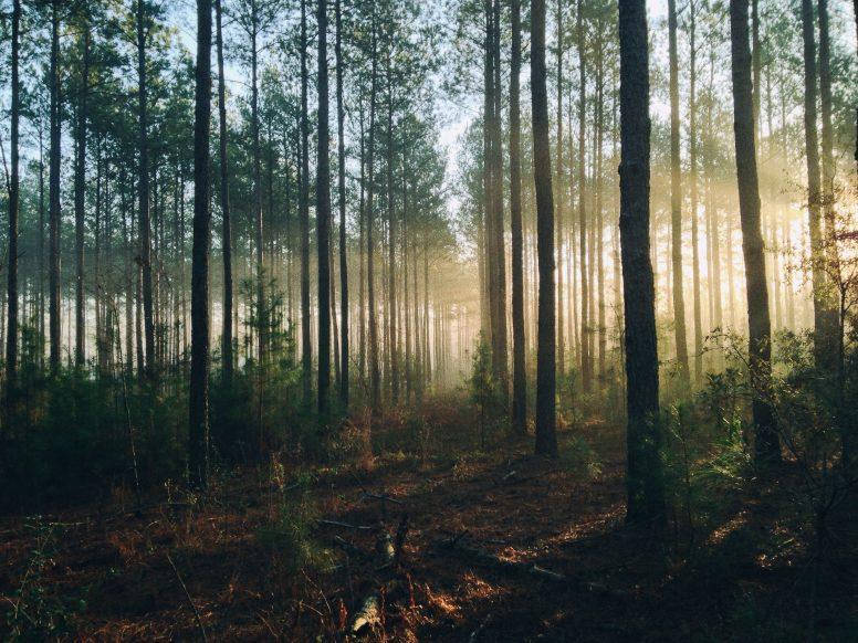 Barwy ziemi i natury